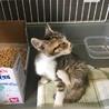 生後2ヶ月の子猫♀を保護しました