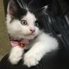 メインクーン女の子♡子猫 サムネイル2