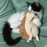 メインクーン女の子♡子猫 サムネイル5