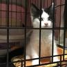 メインクーン女の子♡子猫 サムネイル6