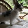 メインクーン女の子♡子猫 サムネイル7