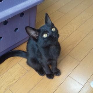 生後3ヵ月のかわいい子猫です。