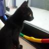 生後3ヵ月のかわいい子猫です。 サムネイル2