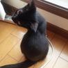 生後3ヵ月のかわいい子猫です。 サムネイル4