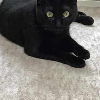 気まぐれで人懐っこい黒猫です