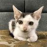 甘えん坊♡膝のり大好き子猫♡お目目がクリクリ ♡