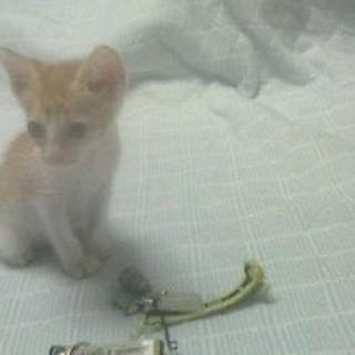 生き延びた300gの子猫