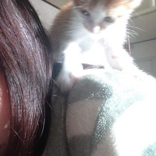 肩のり猫! 茶々丸