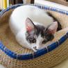 麻の猫カゴに寛ぎ中。