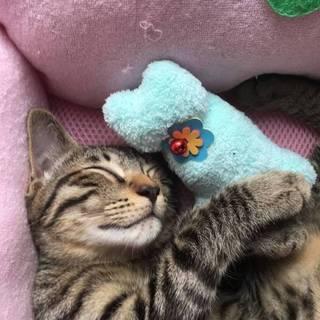 元気で猫が大好きな金時ちゃん