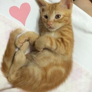 生後2ヶ月のメス猫♡
