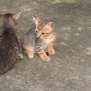目鼻立ちの綺麗な子猫ちゃん