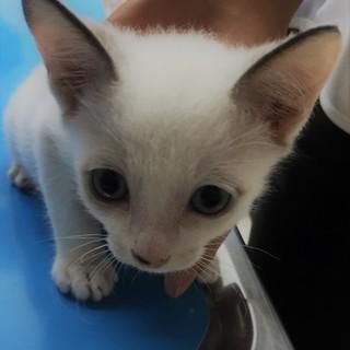ブルーの瞳でグレーの耳と尻尾を持つ白イケメン!