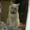 猫の分離不安症の発病