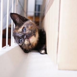 カワイイサビ猫「ベッキーちゃん」