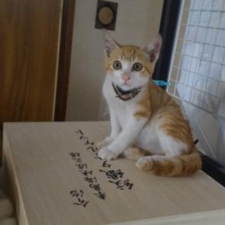 2ヶ月ぐらいの子猫です。