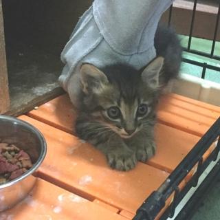 処分間近 可愛い子猫