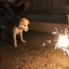 初めての花火に興味津々。