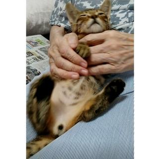 保健所からレスキュー甘えん坊キジ子猫君!!