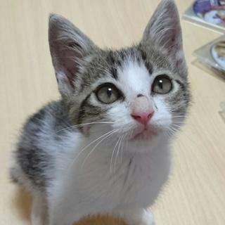 子猫の里親になってください