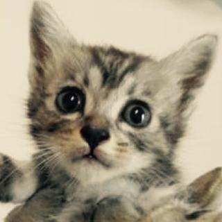 里親さんを待っています。子猫♂灰黒
