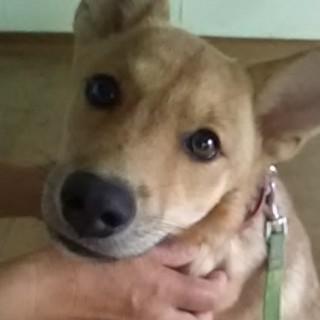 雑種子犬4ヶ月の女の子(*^ω^)