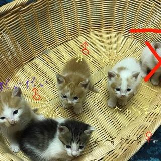 かわいい子猫4きょうだい!