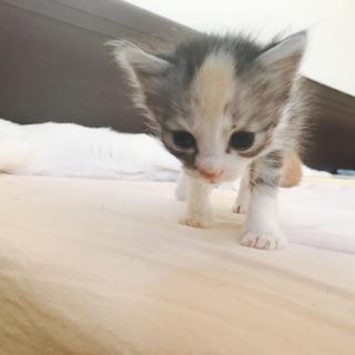 模様が可愛い猫ちゃん