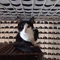 仲良し!! 個性的!! 3ヶ月黒白子猫!!