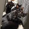 命の危機に追われている子猫兄妹に慈悲を!