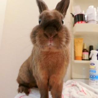 ミニウサギ(太陽くん)