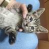キジ子猫いいねくん サムネイル2