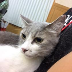 猫の譲渡会 名古屋市西区 サムネイル2