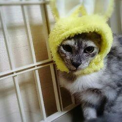 三重県津市 9月3日(日)ほんわか猫な日々 子猫の譲渡会