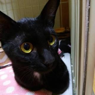 懐っこくてお笑い系 黒猫ドンキー