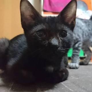黒猫ちゃんです