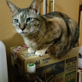 飼い主が亡くなったシニア猫