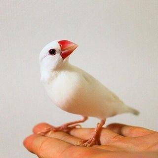 白、ライトシルバー文鳥の...」...