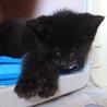 全盲子猫ちゃんが家族を待ってます。くまちゃん サムネイル2