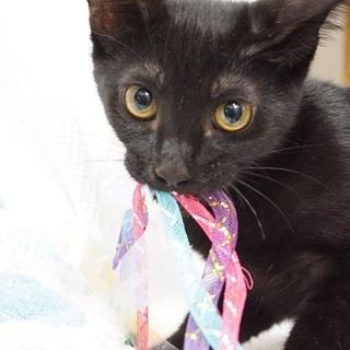 まん丸おめめの黒猫クロタン