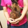 お留守番OK★たえこ★とても賢く優しいサビ猫 サムネイル4