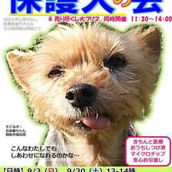 GO!保護犬の会&大フリマ@静岡県小山町