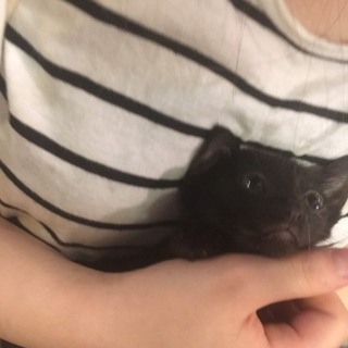 黒猫ちゃん女の子