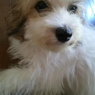 モコモコの子犬です♡