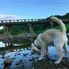 走った後は川で一休みします。そして、また走ります。