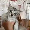 募集ストップします、大きな瞳の可愛い仔猫ちゃん