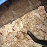 爬虫類や小動物のエサに!ミルワーム サムネイル2