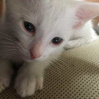 2ヵ月程の子猫