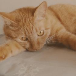 うちの猫たちの動画を作って頂きました