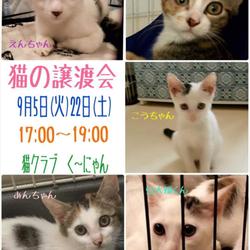9/5(火)・9/23(土)三宮駅前 猫クラブく~にゃん譲渡